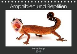 Amphibien und Reptilien (Tischkalender 2019 DIN A5 quer) von Trapp,  Benny