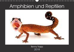 Amphibien und Reptilien (Wandkalender 2018 DIN A3 quer) von Trapp,  Benny