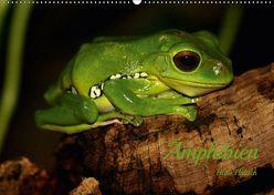 Amphibien (Wandkalender 2019 DIN A2 quer) von Hultsch,  Heike