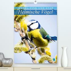 Amsel, Fink und Star: Heimische Vögel (Premium, hochwertiger DIN A2 Wandkalender 2020, Kunstdruck in Hochglanz) von CALVENDO