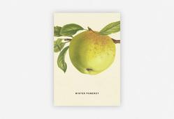 An Apple a Day 2020 – Postkartenset