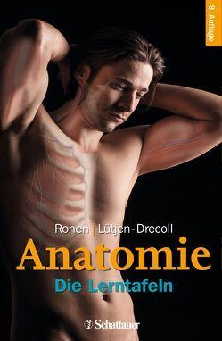 Anatomie von Lütjen-Drecoll,  Elke, Rohen,  Johannes W