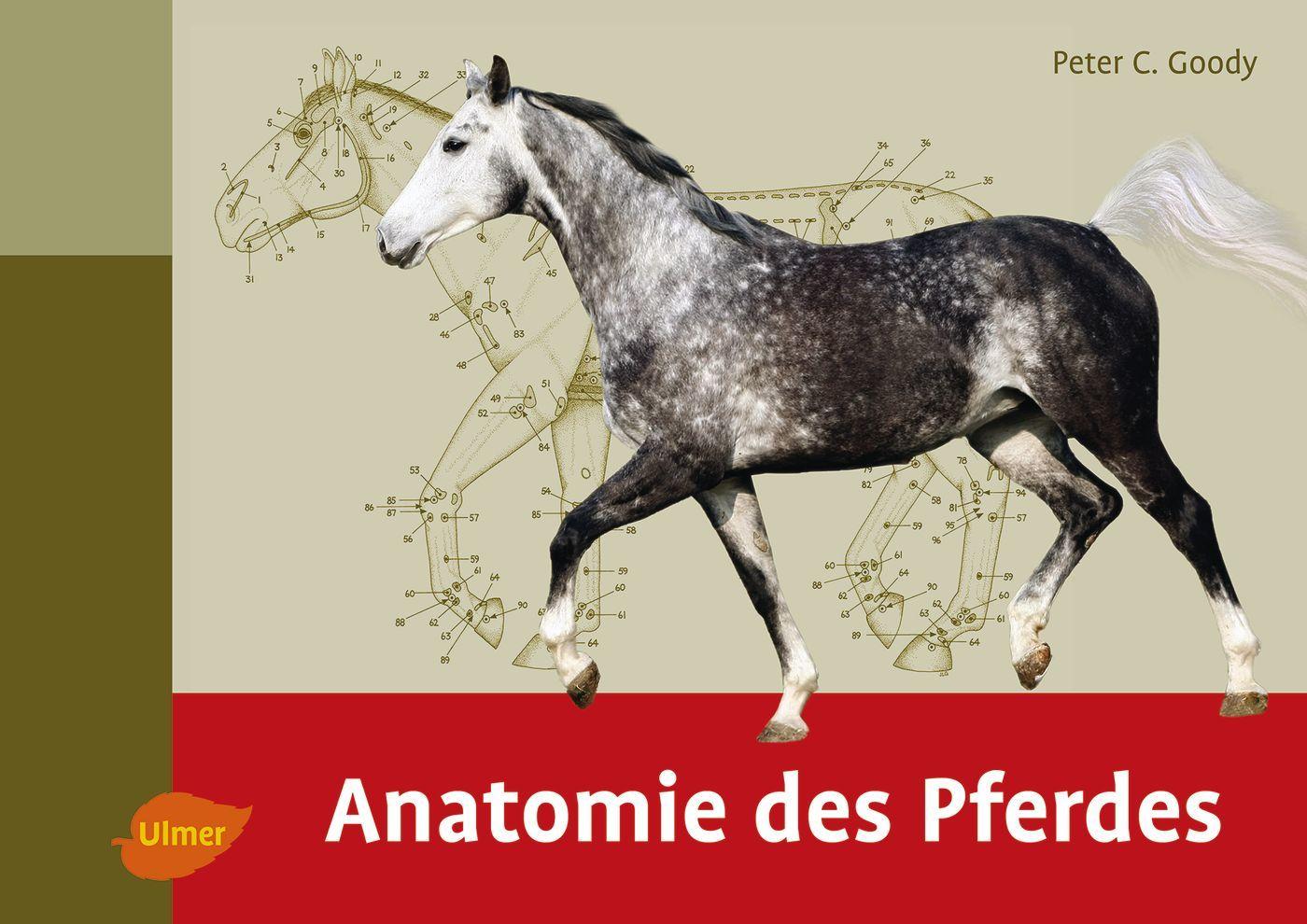 Anatomie des Pferdes von Goody, Peter C.: