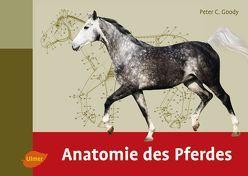 Anatomie des Pferdes von Goody,  Peter C.