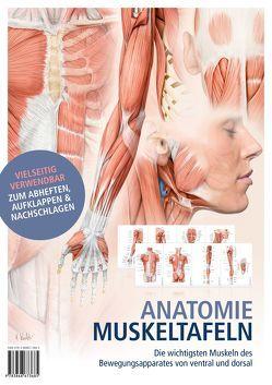 Anatomie-Muskeltafeln