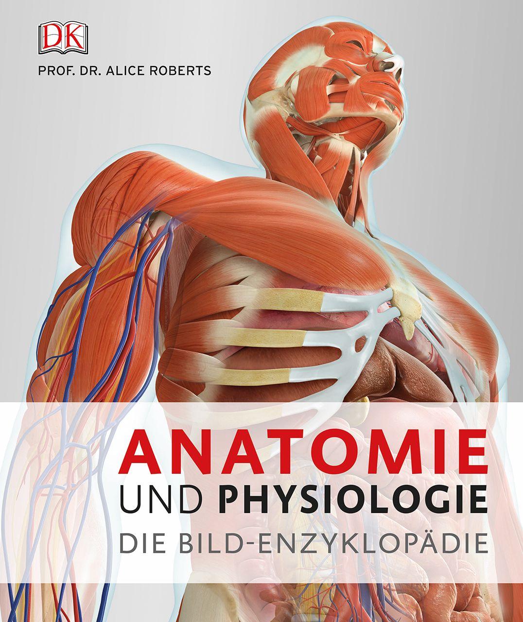Ausgezeichnet Wie Funktioniert Anatomie Und Physiologie Beziehen ...