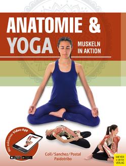 Anatomie & Yoga von Paidotribo