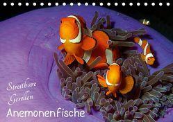 Anemonenfische – Streitbare Gesellen (Tischkalender 2019 DIN A5 quer) von Niemann,  Ute