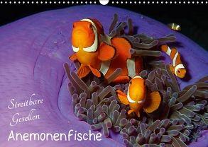 Anemonenfische – Streitbare Gesellen (Wandkalender 2018 DIN A3 quer) von Niemann,  Ute