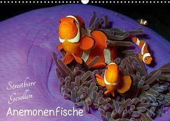 Anemonenfische – Streitbare Gesellen (Wandkalender 2019 DIN A3 quer) von Niemann,  Ute