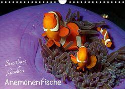 Anemonenfische – Streitbare Gesellen (Wandkalender 2019 DIN A4 quer) von Niemann,  Ute