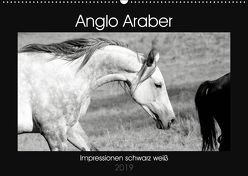 Anglo Araber Impressionen schwarz weiß (Wandkalender 2019 DIN A2 quer) von Bölts,  Meike