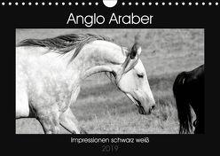 Anglo Araber Impressionen schwarz weiß (Wandkalender 2019 DIN A4 quer) von Bölts,  Meike