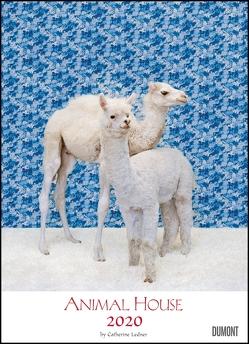 Animal House Kalender 2020 – DUMONT Tier-Kalender – Foto-Kunst – Poster-Format 49,5 x 68,5 cm von DUMONT Kalenderverlag, Ledner,  Catherine