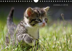ANIMALS 2018 (Wandkalender 2018 DIN A4 quer) von Lehmann,  Heiko