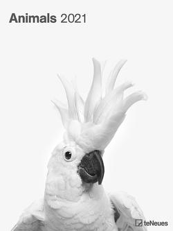 Animals 2021 – Foto-Kalender – Poster-Kalender – 48×64 – Tiere