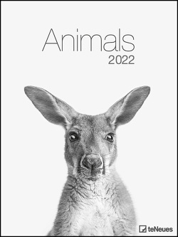 Animals 2022 – Foto-Kalender – Poster-Kalender – 48×64 – Tiere