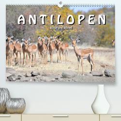 Antilopen, schön und schnell (Premium, hochwertiger DIN A2 Wandkalender 2020, Kunstdruck in Hochglanz) von Styppa,  Robert