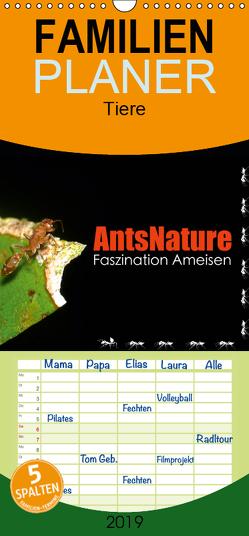 AntsNature – Faszination Ameisen – Familienplaner hoch (Wandkalender 2019 , 21 cm x 45 cm, hoch) von Drenske,  Bianca