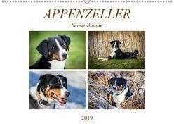 Appenzeller Sennenhunde (Wandkalender 2019 DIN A2 quer) von SchnelleWelten