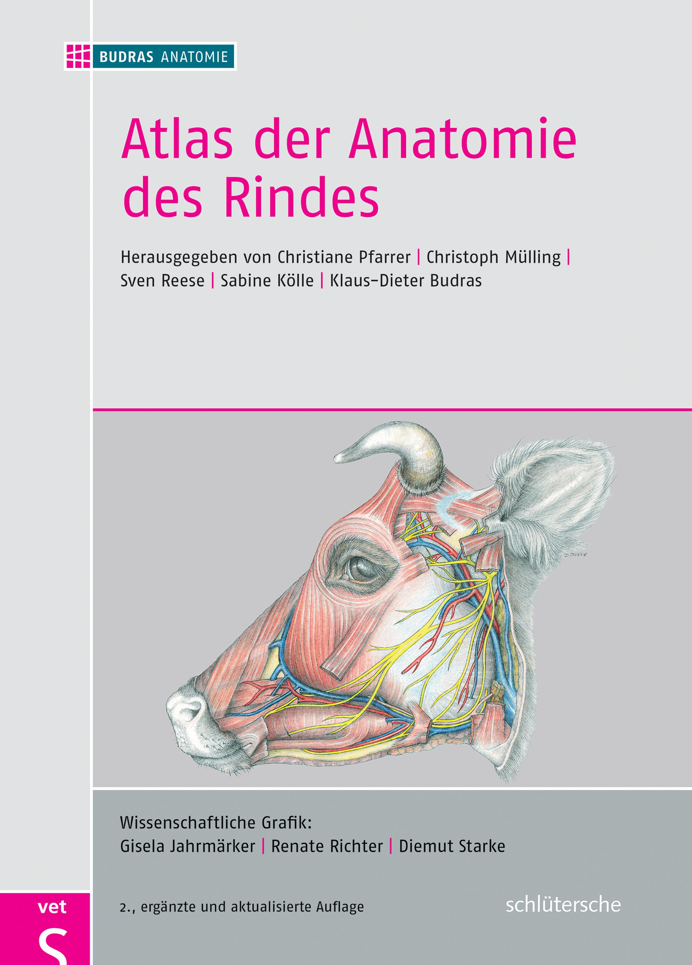 Atlas der Anatomie des Rindes von Budras, Klaus-Dieter, Mülling, Chri