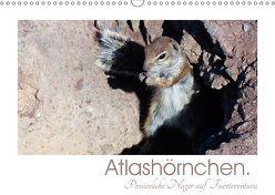 Atlashörnchen. Possierliche Nager auf Fuerteventura (Wandkalender 2019 DIN A3 quer) von M. Laube,  Lucy