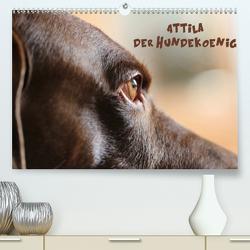 Attila, Der Hundekönig (Premium, hochwertiger DIN A2 Wandkalender 2021, Kunstdruck in Hochglanz) von Hultsch,  Heike