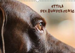 Attila, Der Hundekönig (Wandkalender 2019 DIN A3 quer) von Hultsch,  Heike