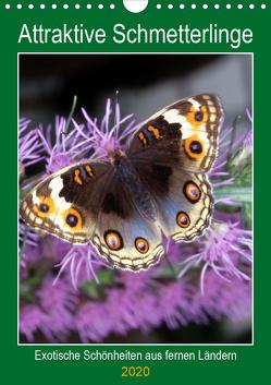 Attraktive, Schmetterlinge (Wandkalender 2020 DIN A4 hoch) von Reupert,  Lothar