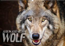 Auge in Auge mit dem Wolf (Wandkalender 2019 DIN A2 quer) von Bleicher,  Renate