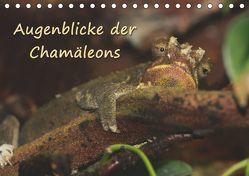 Augenblicke der Chamäleons (Tischkalender 2019 DIN A5 quer) von Chawera