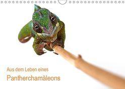 Aus dem Leben eines Pantherchamäleons (Wandkalender 2019 DIN A4 quer) von Eppele,  Klaus