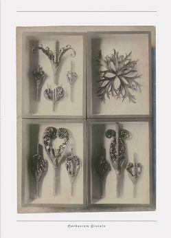 Aus der Werkstatt der Natur von Blossfeldt,  Karl