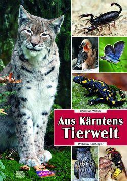 Aus Kärntens Tierwelt von Fritz,  Gregor, Gailberger,  Wilhelm, Jerger,  Thomas, Wieser,  Christian