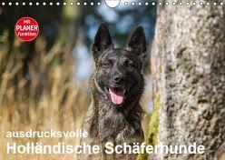ausdrucksvolle Holländische Schäferhunde (Wandkalender 2019 DIN A4 quer)