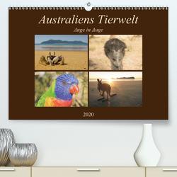 Australiens Tierwelt – Auge in AugeAT-Version (Premium, hochwertiger DIN A2 Wandkalender 2020, Kunstdruck in Hochglanz) von Wasilewski,  Martin
