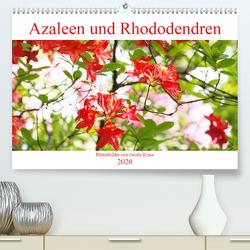 Azaleen und Rhododendren Blütenbilder (Premium, hochwertiger DIN A2 Wandkalender 2020, Kunstdruck in Hochglanz) von Kruse,  Gisela