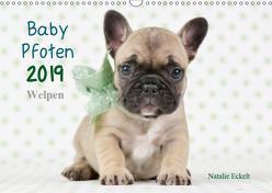 Baby Pfoten (Wandkalender 2019 DIN A3 quer) von Eckelt,  Natalie