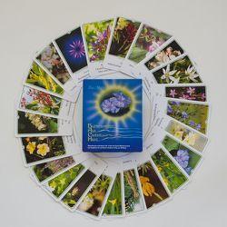 Bachblüten-Karten von Maly,  Ilse