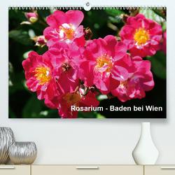 Baden bei Wien – Rosarium (Premium, hochwertiger DIN A2 Wandkalender 2021, Kunstdruck in Hochglanz) von J. Strutz,  Rudolf