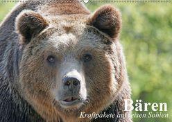 Bären. Kraftpakete auf leisen Sohlen (Wandkalender 2019 DIN A2 quer) von Stanzer,  Elisabeth