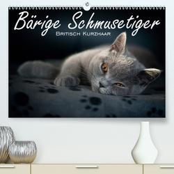 Bärige Schmusetiger – Britisch Kurzhaar / CH-Version (Premium, hochwertiger DIN A2 Wandkalender 2020, Kunstdruck in Hochglanz) von Zimmermann-Probst,  Inge