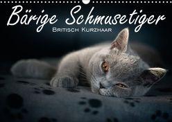 Bärige Schmusetiger – Britisch Kurzhaar / CH-Version (Wandkalender 2018 DIN A3 quer) von Zimmermann-Probst,  Inge