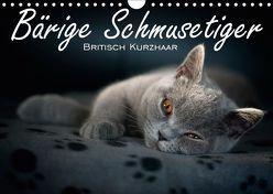Bärige Schmusetiger – Britisch Kurzhaar / CH-Version (Wandkalender 2019 DIN A4 quer) von Zimmermann-Probst,  Inge