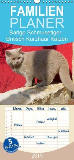 Bärige Schmusetiger – Britisch Kurzhaar Katzen – Familienplaner hoch (Wandkalender 2019 , 21 cm x 45 cm, hoch) von Verena Scholze,  Fotodesign