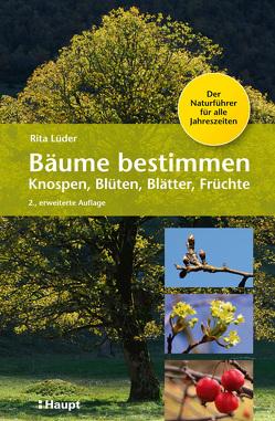Bäume bestimmen – Knospen, Blüten, Blätter, Früchte von Lüder,  Rita