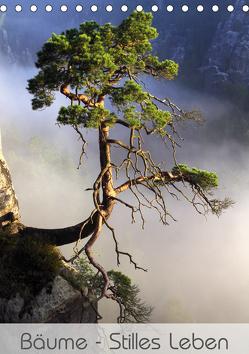 Bäume – Stilles Leben (Tischkalender 2020 DIN A5 hoch) von Behr,  Jana