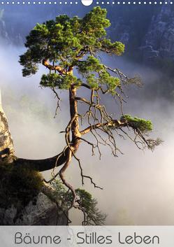 Bäume – Stilles Leben (Wandkalender 2020 DIN A3 hoch) von Behr,  Jana