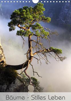 Bäume – Stilles Leben (Wandkalender 2020 DIN A4 hoch) von Behr,  Jana