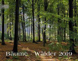 Bäume-Wälder 2019 von Schubotz,  Martin